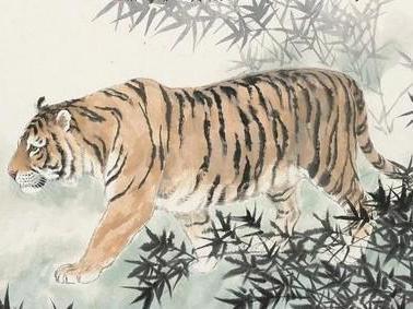 壁纸动物虎老虎桌面378_283