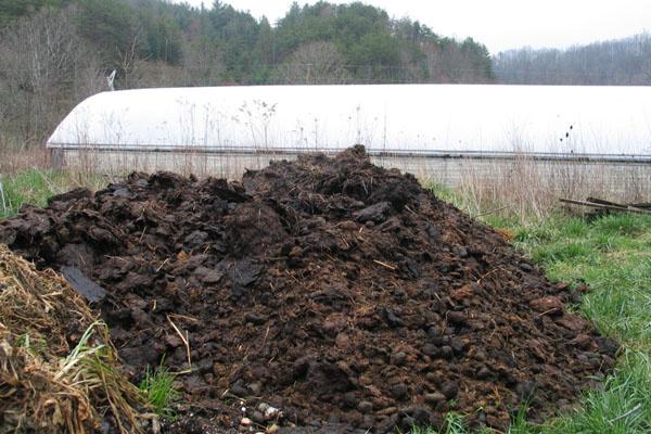 芹菜的有机肥与化肥配合使用方法