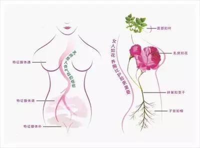 春天到了,该如何呵护你的乳房?