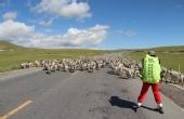 酷跑冠军踩着轮滑去西藏!