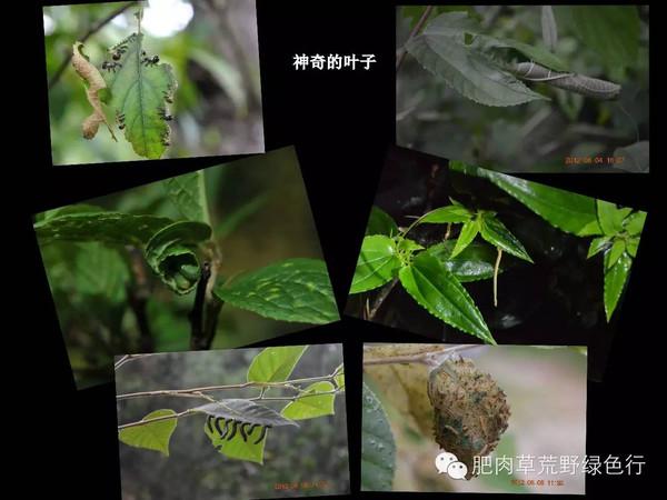 自然观察笔记——昆虫乱炖