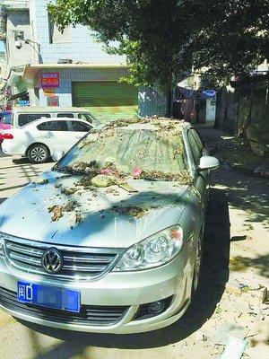 网友拍照的被泼渣滓的汽车。