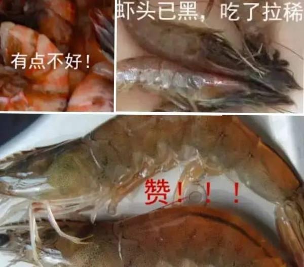 虾头的解剖结构
