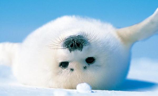 为了他,我都想去北极了!