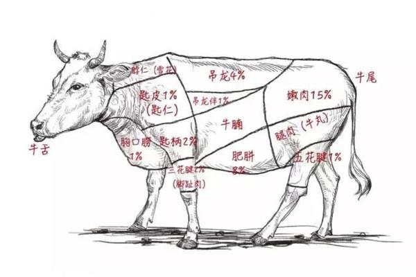 还教你潮汕地区对牛肉全身部位的细分食用法则,寓教于食对吃货来说