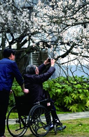南京/市民在樱洲赏花