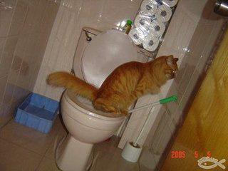 猫咪训练方法图片