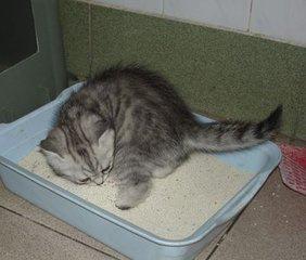 猫咪训练学校图片