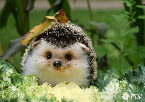 动物笑得很灿烂的图片