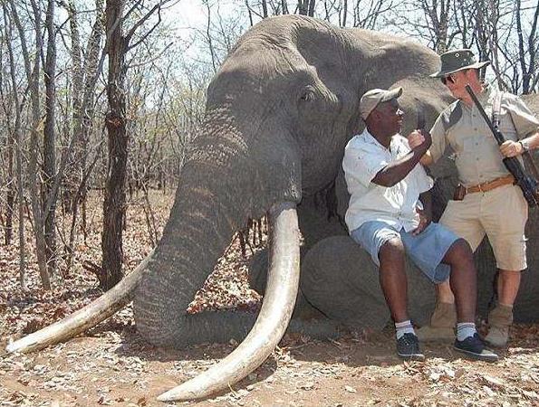 花200万获得狩猎证为了杀一头大象事后还感到自豪