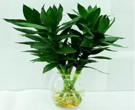常见室内緑色植物的强大功效