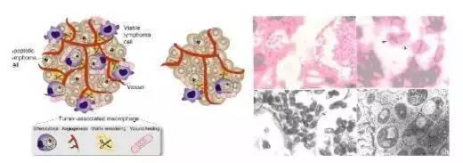 皮肤细胞分层结构图