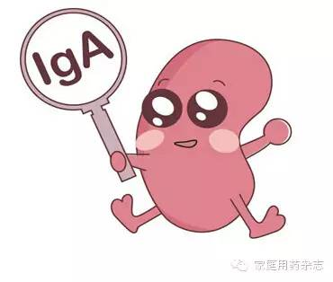 与前面提到的急性肾小球肾炎相比,该病具有以下几个特点值得大家注意