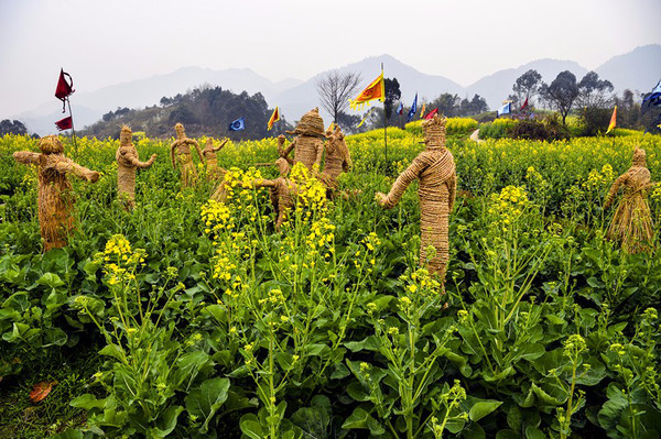 油菜花,地景艺术,涂鸦