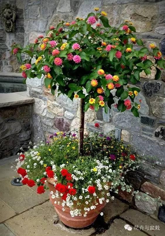 选适当大小的花盆,盆的底孔用两片瓦片或薄薄的泡沫片盖住,保证盆土不图片