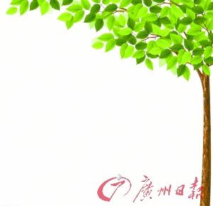 全市四成林地种桉树 有人担心引发生态问题