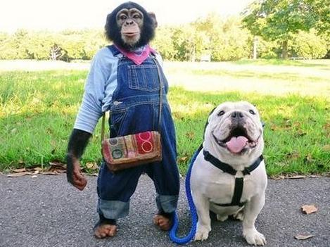 黑猩猩小庞和斗牛犬詹姆斯