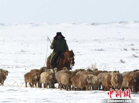 富蕴县库尔特乡当局与富蕴县公安局边防大队库尔特边防派出所通过30小时间断功课,买通100千米的牧道,实时输送饲草料,为2万牛羊解困,14日,帮忙牧民顺遂转场。 达吾然 摄