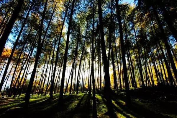 雅安   >>>>   碧峰峡自然风景区   >>>>   碧峰峡野生动物园