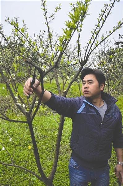 罗强打算把父亲的果园发展壮大