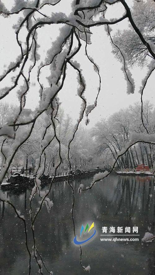 湖前银枝满柔情,镜里树影如娇娘。 王柯岚/摄