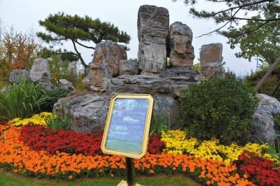 八宝山革命公墓北山生态墓园的生态景观墓。京华时报记者王海欣摄