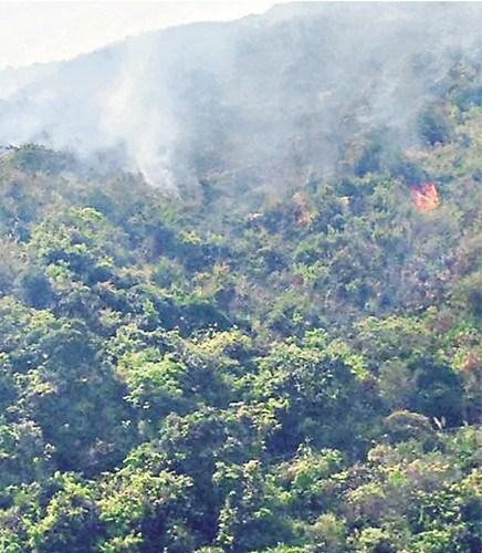 香港荃湾下花山发生山火,焚烧约3小时才救熄。图自香港《文汇报》
