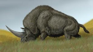 但现在又有一个问题困扰着科学家:为什么这种生物能存活如此长的时间才最终灭亡呢?托木斯克大学科学家安德烈猜测,西伯利亚南部在过去的气候可能适合该生物的生存。