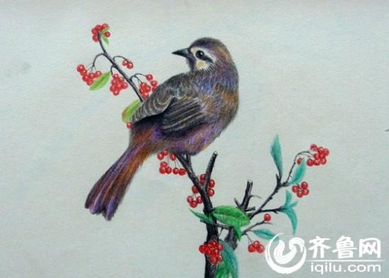 坊五旬女子痴迷铅笔画描绘生灵美 3年创作1300余幅作品 组图
