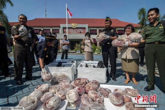 资料图:当地时间2015年7月8日,印尼泗水,印尼海关官员查获一批1.3吨将被运往新加坡的冷冻穿山甲并焚烧销毁。