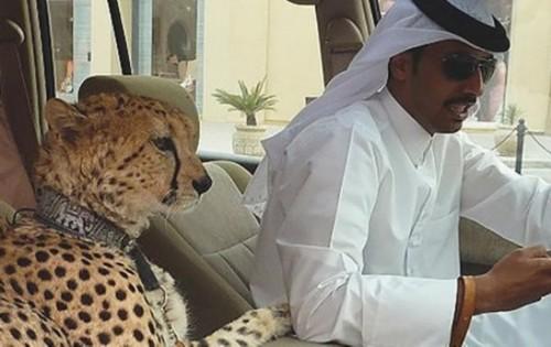 迪拜人有钱吧,嫁个迪拜老公就一定幸福吗?下面来看看一个嫁给迪拜男人的中国女子的自述:穿衣服从此有了规定……结婚后,我和大多数嫁穆斯林的中国女性一样,就这么入了教。