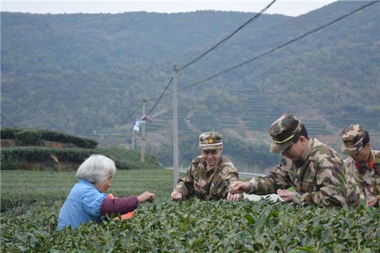 白露边防派出所官兵助农采茶服务队帮助空巢老人采摘茶叶
