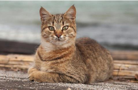 1、了解每个年龄阶段的猫咪饮食