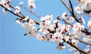 春日里与您细说青海花事