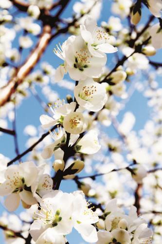 """春风吹,燕儿归,又是一年桃花儿开。阳春三月,在明媚春光下,桃花""""争开不待叶""""己俏开于枝头,有的高温地段向阳花木已是芬芳烂漫、妩媚鲜丽,如一片片云霞,与绿树婆婆的垂柳相衬映,形成滨城桃红柳绿、柳暗花明的春日美景。"""