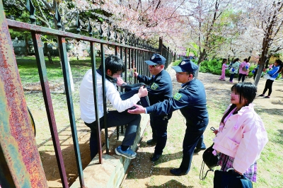 玉渊潭工作人员将钻铁栅栏的游客劝回;园内一名女孩跳起来摘花 摄/记者 吴海浪 a06版