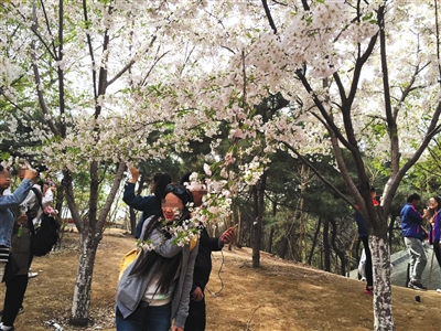 昨日,玉渊潭公园内部分游客拉着树枝拍照。