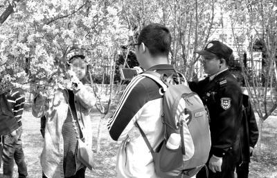 一名游客在玉渊潭公园折弯樱花枝拍照被制止。玉渊潭公园供图。