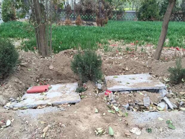 朱集村双龙湾义冢,两座坟头被挖了进去,迁回了麦地。