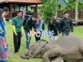 《一路上有你第二季片花》第五期 沙溢胆小害怕大象 被袁咏仪捉弄爆笑全场