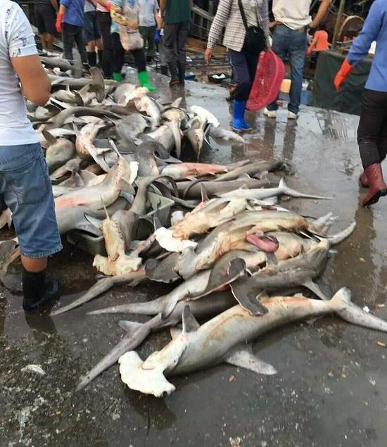 4月9日,有网友在朋友圈中发消息称,三亚水产码头当街低价售卖濒危保护动物锤头鲨,数量达近百条。