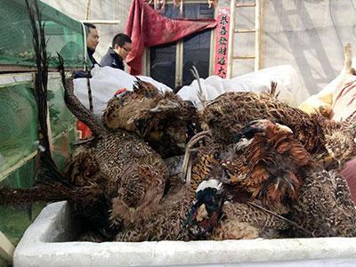央视暴光河北邢台不法销售家养鸟类,一位鸟估客迫于压力自首