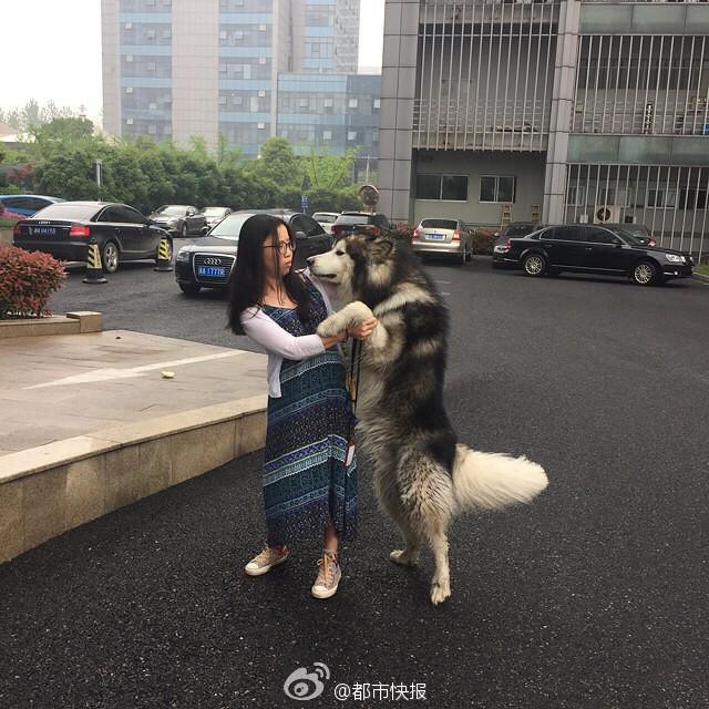 城管们试着抓住狗狗的犬绳,没想到却被它反扑过来,左手的手背上留下了一道伤口。试了几次,都没成功,他们只得又退了回来,先疏散狗狗身边的人群。