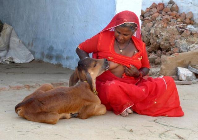 妈妈是我的第一个女人_印度女人亲子哺乳失去母亲的小牛:没想到最后如此感人