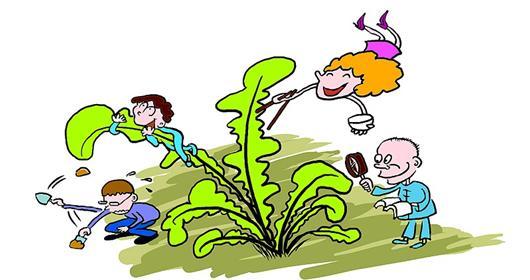 小芽生长的卡通图片