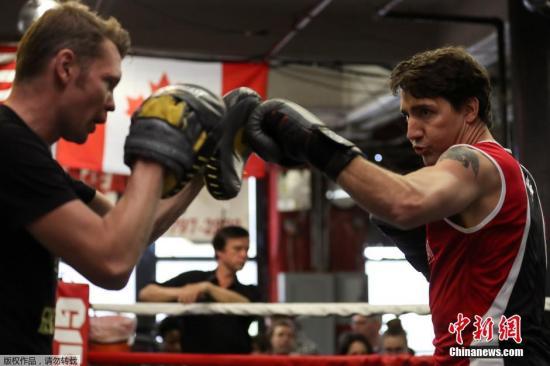 这名加拿大的年轻总理戴上拳击手套,身穿短袖露出纹身,架势十足.