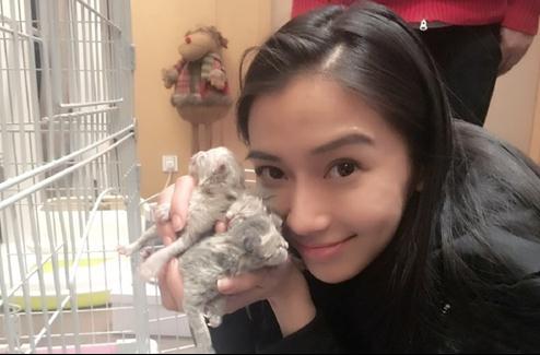杨颖和小动物合照