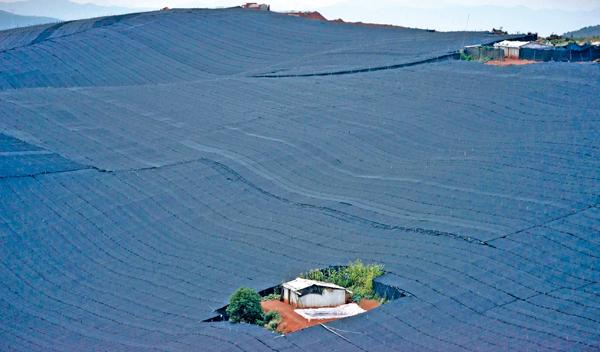 云南文山,建水青龙镇水塘村,附近连绵的山上全部被三七地包围。