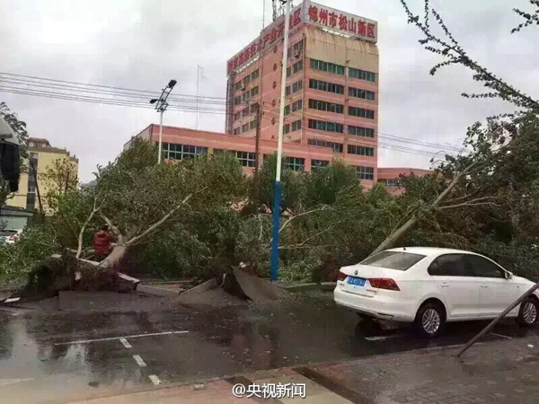 暴雨大风袭击辽宁:大树被连根拔起,已发8次灾害性天气预警