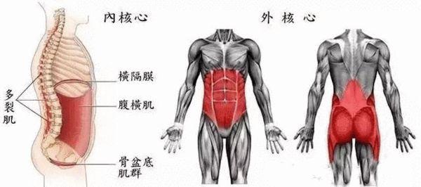 身体肌肉图_苦练核心效果不明显?应了解身体主要核心肌肉-搜狐体育
